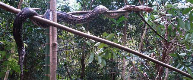 Visualincrease angst snake